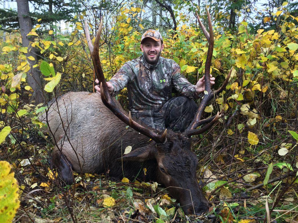 Alberta Bull Elk